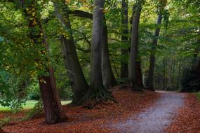 ветки, деревья, осень, парк, листья