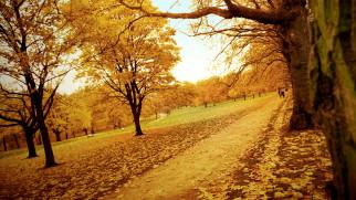 деревья, листья, парк, осень, дорожки