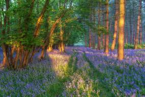 Лес, Весна, Цветы, Поляна