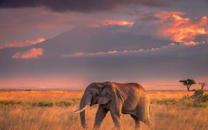 закат, свет, облака, вечер, слон, природа