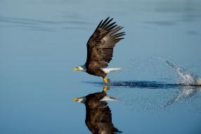 wildlife, reflection, splash, lake