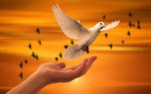 белый, голубь, взлетает