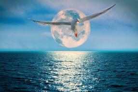 луна, океан, чайка