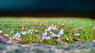 щель, поляна, трава, листья