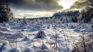 Снег, зима
