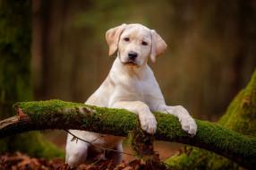 взгляд, собака, фон