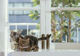 серые, окно, котята