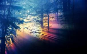 лес, деревья, лучи, рассвет