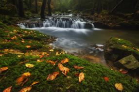 лес, осень, листья, вода, камни, поток, речка, водопады, водоем, пороги