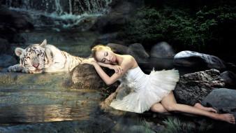 тигр, балерина, озеро, камни, водопад