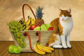 корзина, фрукты, кошка