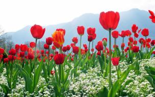 цветы, разные вместе, красные