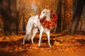 собака, природа, деревья, парк, листья, осень