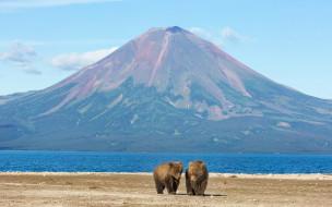 медведи, животные, млекопитающие, вулканы, горы, пейзажи, озеро, простор, природа, россия, камчатка
