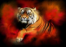 тигр, фон, взгляд