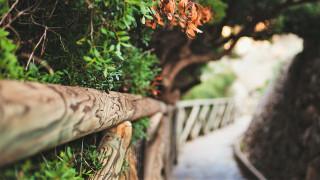 аллея, деревья, мост, ограда