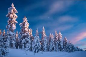 природа, зима, дорога, лес, небо, снег, деревья, ели, финляндия, finland, lapland, лапландия