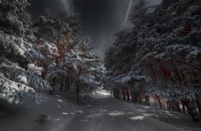 природа, дороги, ночь, лес, зима