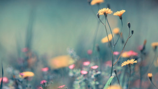 луг, желтые, трава, розовые