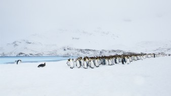 пингвины, природа, пейзаж