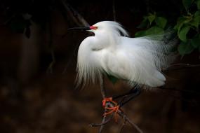 птица, белая, цапля, дерево