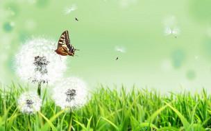 одуванчики, трава, бабочка