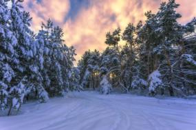 дорога, лес, снег