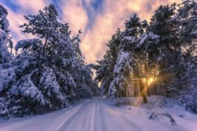 снег, лес, дорога