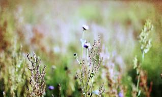 соцветия, трава, бабочка, луг