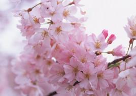 ветка, весна, цветение