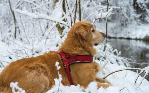 пёс, снег, собака, профиль, природа, зима, ветки