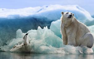 пингвин, белый медведь
