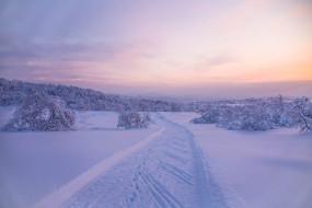 деревья, снег
