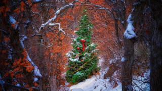елка, снег, лес