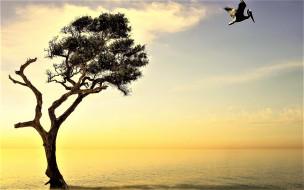 рассвет, пеликан, дерево, море