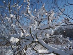 ветки, дерево, снег