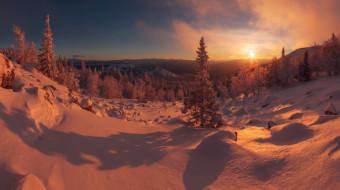снег, деревья, закат