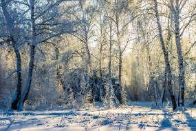 лес, деревья, берёзы, заповедник, снег, зима, пейзаж, природа, Усмань