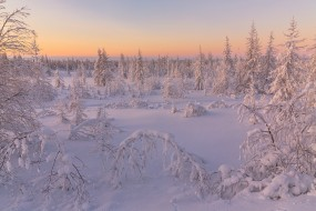 деревья, Салехард, снег, Россия