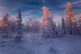 Салехард, Россия, деревья, снег