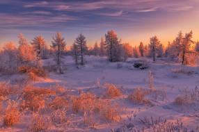 Салехард, Россия, снег, деревья