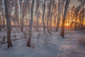 снег, деревья, Салехард, Россия