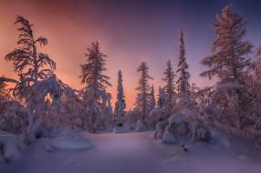 Россия, Салехард, деревья, снег