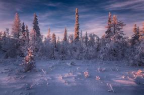 Россия, снег, деревья, Салехард
