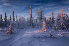 Салехард, деревья, Россия, снег