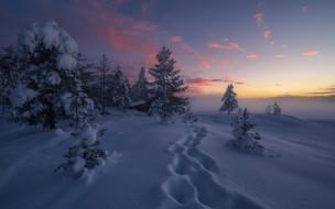 снег, деревья