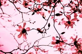 ветки, цветение, дерево
