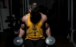 бодибилдинг, мышцы, культурист, тренажерный зал