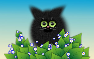 цветы, кот