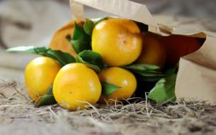 мандарины, солома, листья, пакет